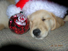 Mmmmm_sleepy_christmas