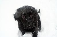 Puppy_snow_1