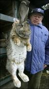 Wascally_wabbit